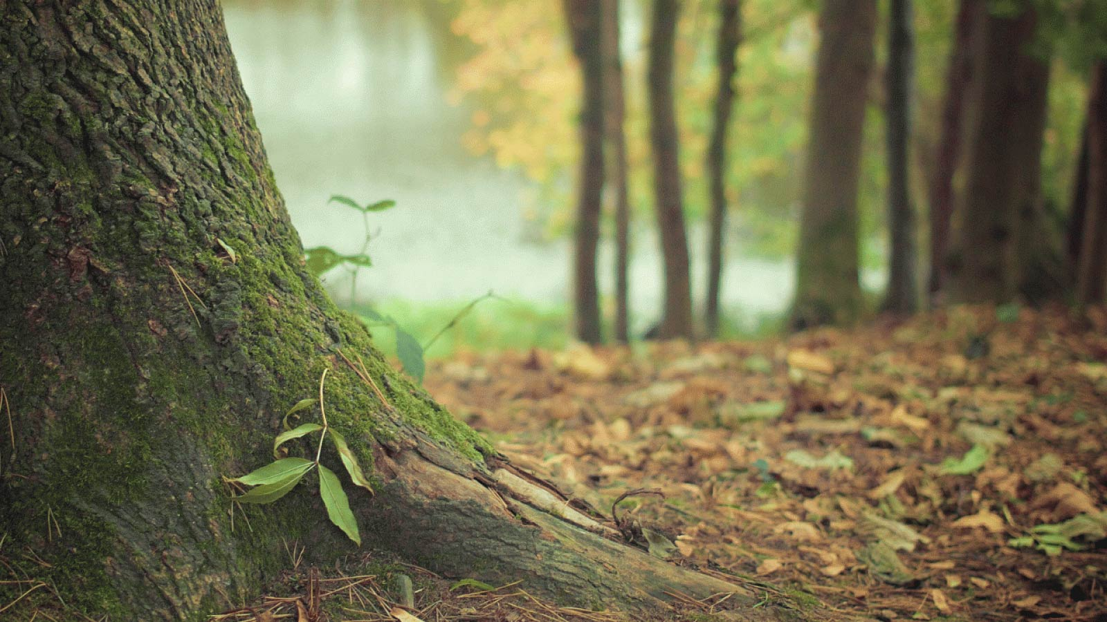 biomasse végétale